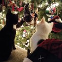 Holiday Hazards that Endanger Your Pet