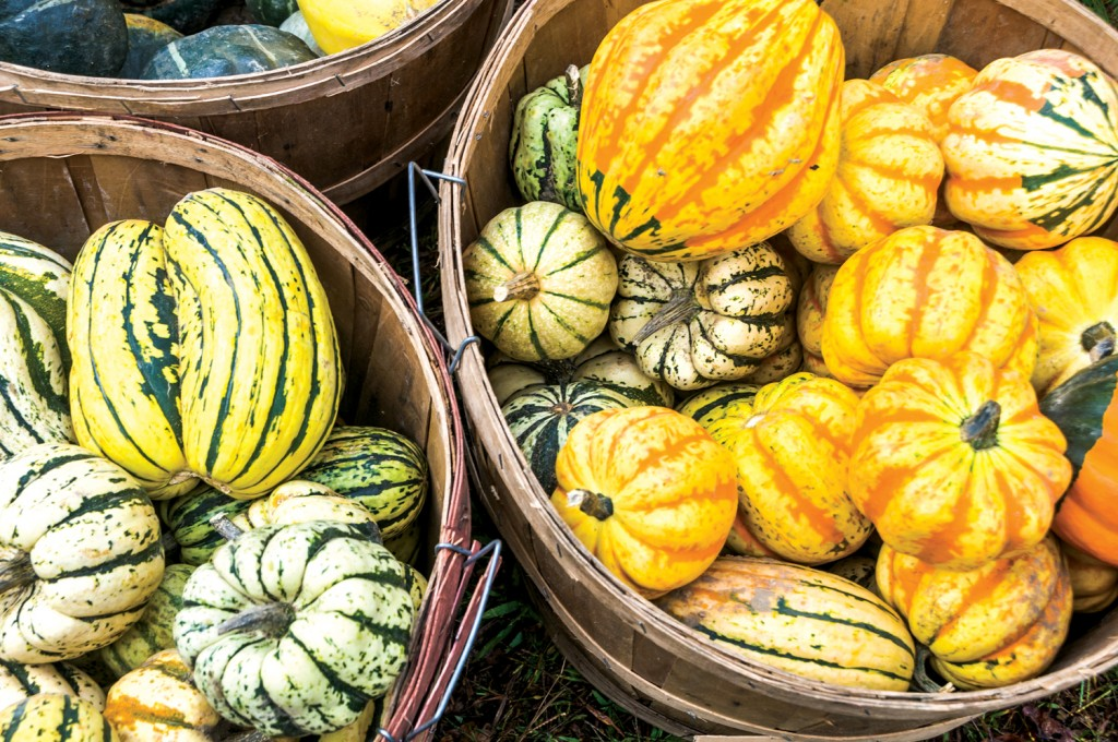Baskets of  Winter Squash